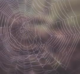 Story writing is like weaving a web