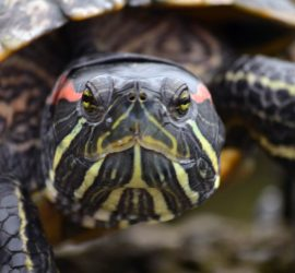 """""""Turtle"""" by Brad Montgomery"""